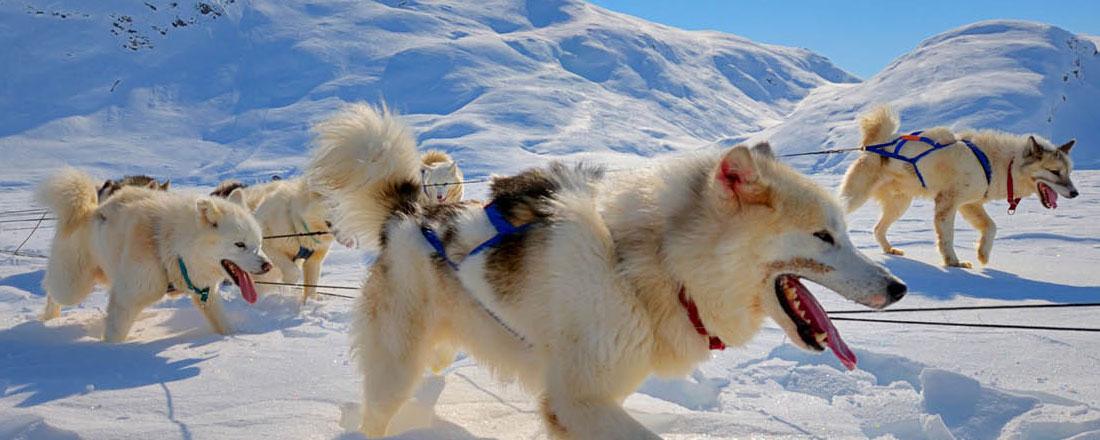 Nyhed: Tag på drømmerejse til Grønland....